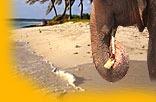 Sri Lanka Tourismus