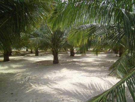 Genusswandern, sei es am frühen Morgen, sei es durch Palmenhaine oder Teeplantagen © B&N Tourismus