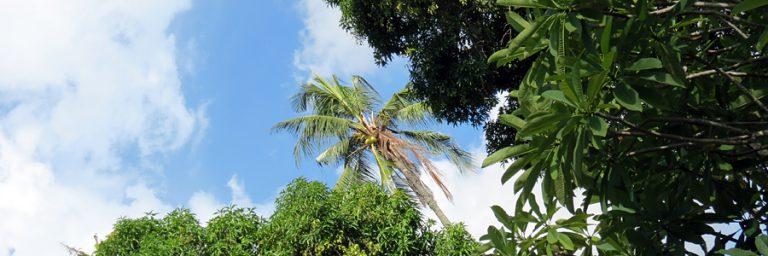 Reisen nach Sri Lanka © Sri Lanka Tourismus B&N Tourismus