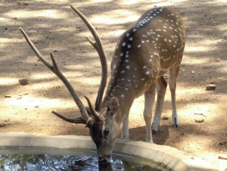 Yala National Park © B&N Tourismus